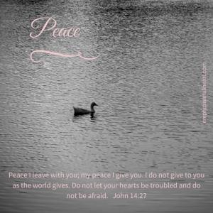 Peace Duck